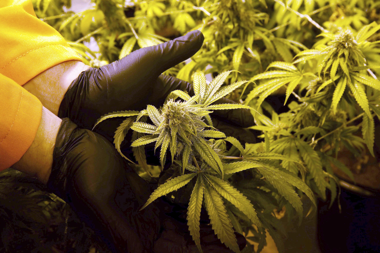 Florida_election_marijuana.jpeg-b2685